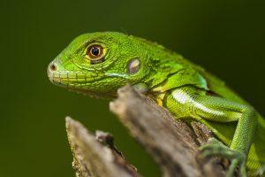CostaRica_Wildlife_12042013-_MG_1104