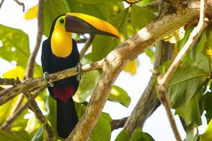 CostaRica_Wildlife_12042013-_MG_1282