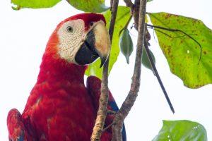 CostaRica_Wildlife_13042013-IMG_2336