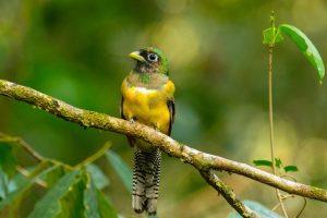 CostaRica_Wildlife_13042013-IMG_2769