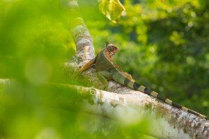 CostaRica_Wildlife_14042013-IMG_3200