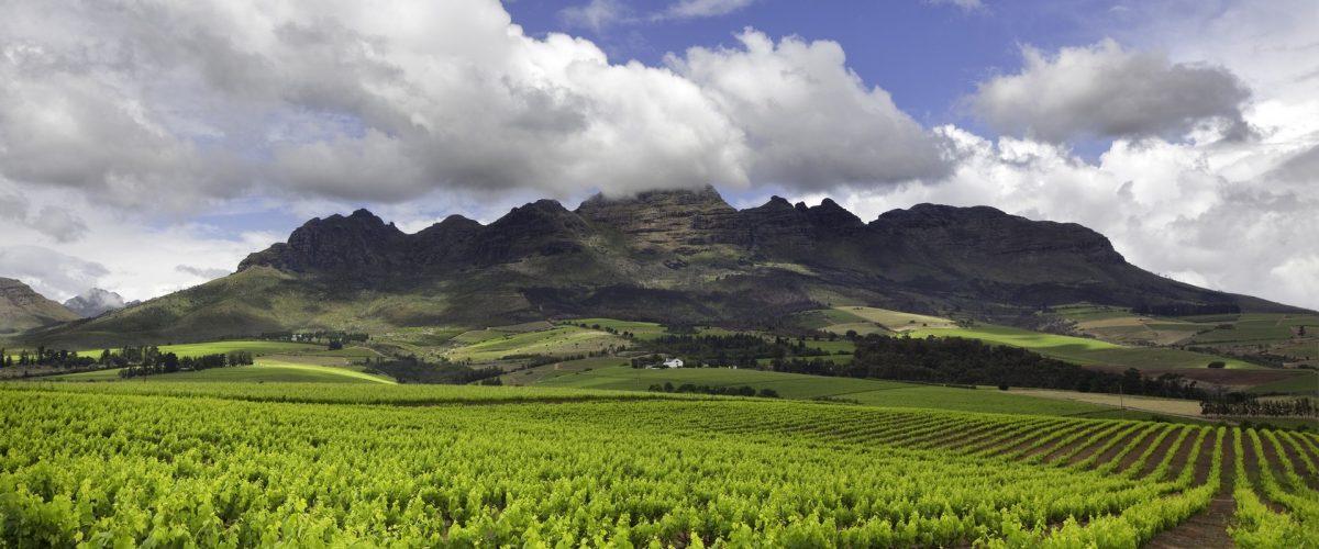 Kapstadt_Stellenbosch