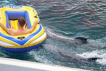 Delfine im Delfinarium