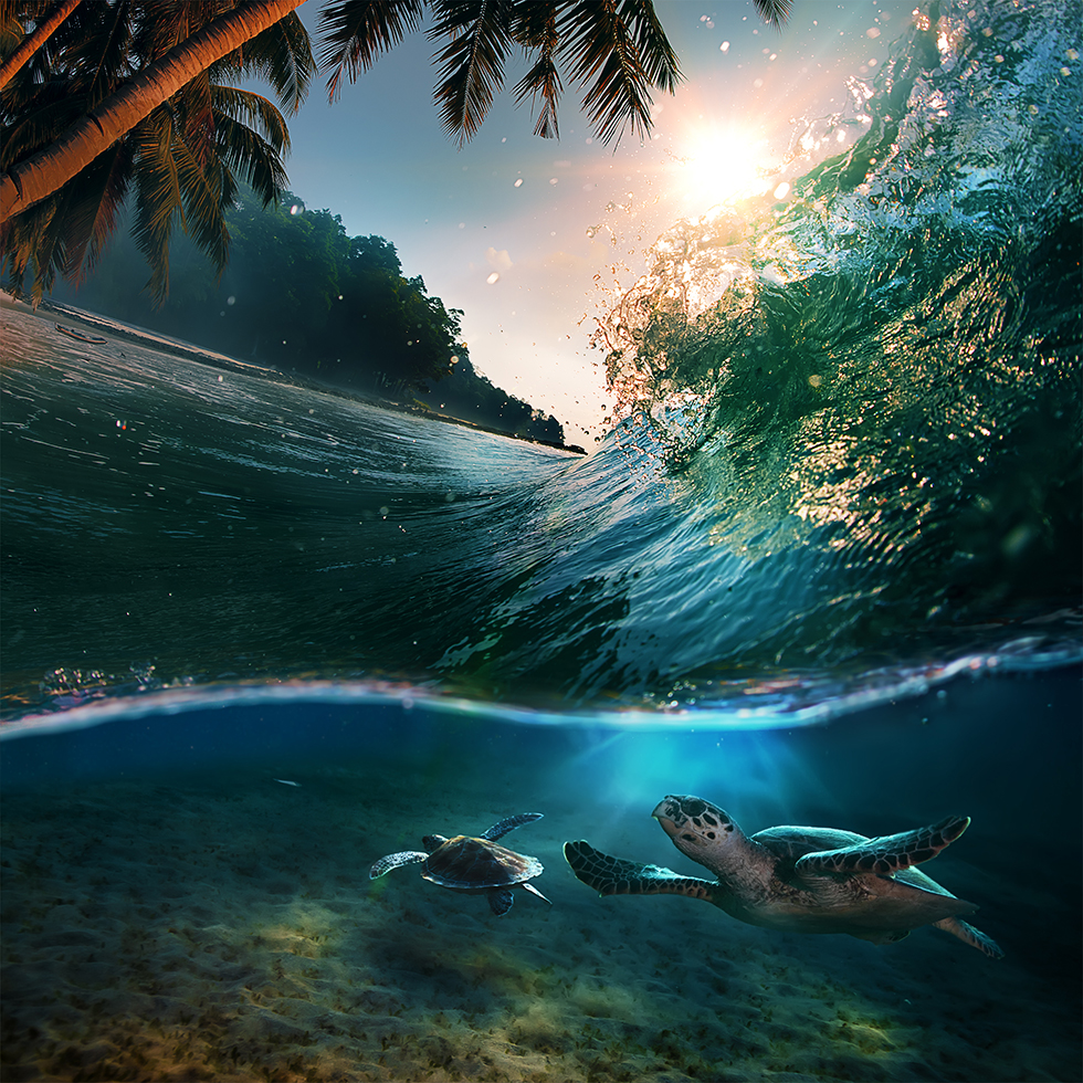 Mana Hawaii Natur Meer