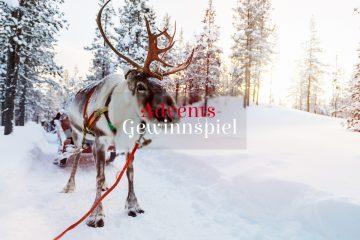 Rentier in lappland, Finnland