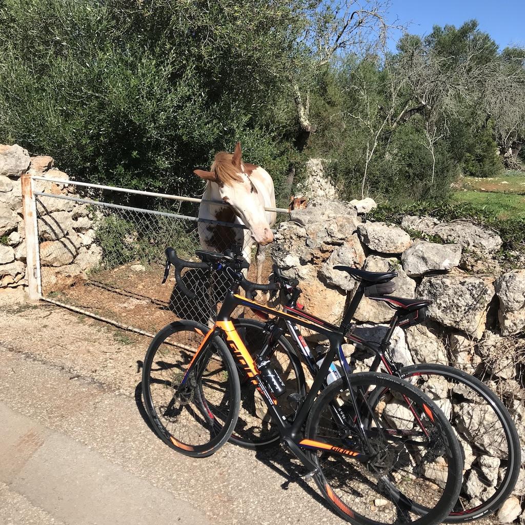 Fahrrad am Urlaubsort nutzen. Pferd am Wegesrand